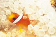 海底海藻图片_48张