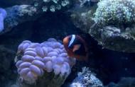 海底珊瑚图片_6张