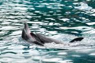 可爱的海豚图片_10张