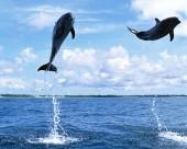 海豚图片_40张