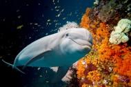多種多樣的海洋動物圖片_15張