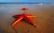 棘皮动物海星图片_15张