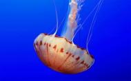 海洋里各种奇妙的海底生物图片_14张
