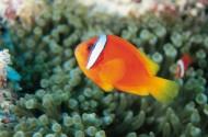 海洋魚類生物特寫圖片_37張