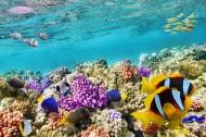 五彩斑斕的海洋魚群圖片_15張