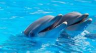 活泼可爱的海豚图片_7张