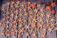 美麗的海星圖片_18張