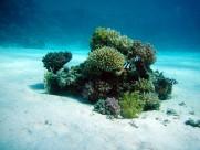 海底的珊瑚圖片_15張