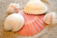 贝壳堆图片_8张