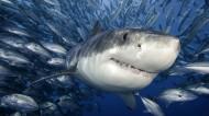 深海狂鯊圖片_8張