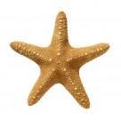 深海里的海星圖片_9張