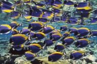 深海鱼群图片_78张