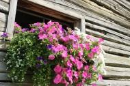 植物装饰的窗户图片_13张