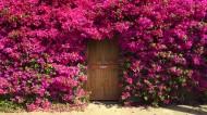 全世界各种有特色有爱的门图片_23张