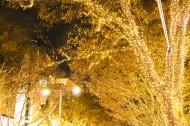日本表参道的照明灯图片_10张