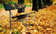 长椅、长凳、公园图片_19张