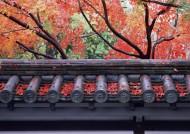 日式庭院和枫叶图片_23张