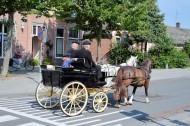 荷兰传统马车图片_14张