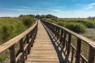 通向遠處的木橋圖片_12張