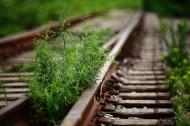 歷史記憶中的鐵路圖片_8張