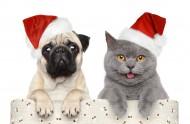 小狗小猫过圣诞节图片_15张