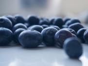 酸酸甜甜的蓝莓图片_22张
