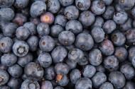新鲜蓝莓图片_15张
