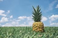 一个菠萝高清图片_12张