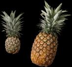 菠萝透明背景PNG图片_15张