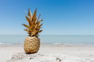 形态不一的菠萝图片_11张