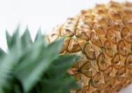 菠萝图片_6张
