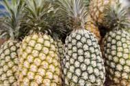 菠萝图片_7张