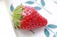 酸甜好吃的草莓图片_8张