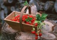 新鲜草莓图片_10张