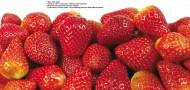草莓图片_22张
