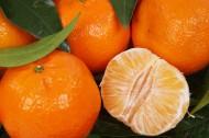 酸甜可口剥开的橘子图片_10张