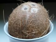 棕色的椰子圖片_16張