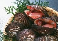 美味的海鲜食材图片_16张
