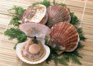 超级好吃的海鲜食材图片_16张
