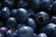好吃的蓝莓图片_14张