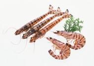 鲜美的河虾图片_14张