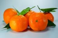 新鲜美味的橘子图片_12张