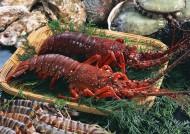 鲜美的龙虾图片_20张
