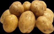 马铃薯透明背景PNG图片_15张