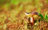 森林中的蘑菇图片_24张