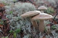 生长在地上的蘑菇图片_15张