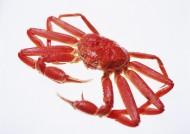 螃蟹图片_27张