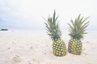 美味的菠萝图片_16张