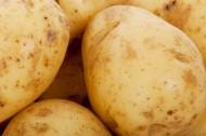 马铃薯土豆图片_7张
