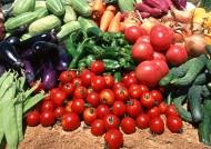 丰收蔬菜图片_18张